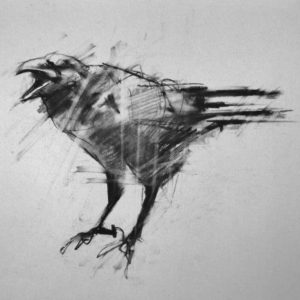 murder of crows - July2014